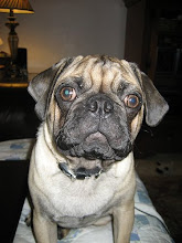  my muttley pug