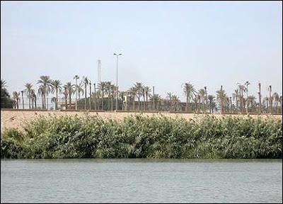 Пальмы на берегу Тигра. Palms on the banks of Tigris river