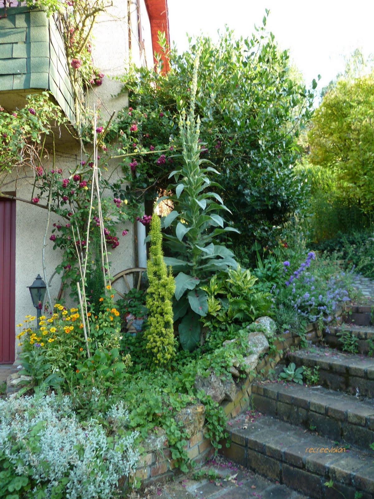 recreevision une plante s 39 est invit e au jardin ForPlante Au Jardin