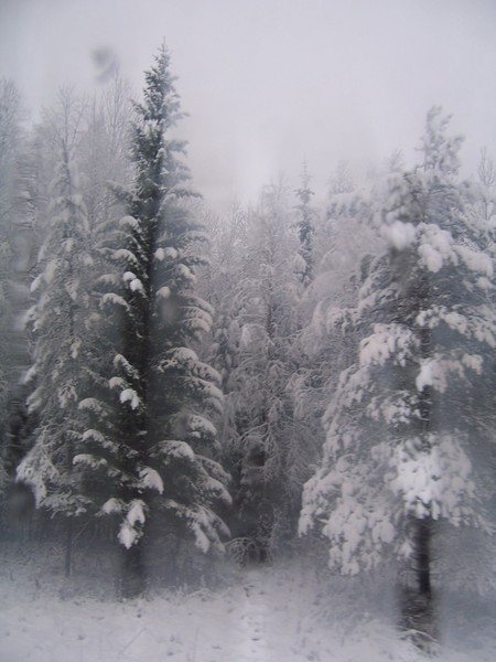 [cold+evergreens]