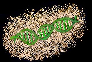 Vainas y semillas de soja formando una doble hélice de ADN. | Nature