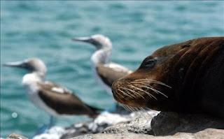 Desafíos para la conservación de las Islas Galápagos
