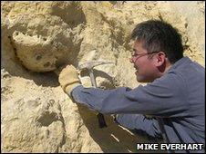Encuentran en EE.UU. fósil de tiburón gigante
