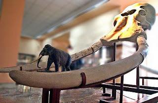 Colmillos de un Elephas antiquus