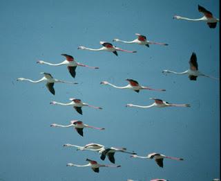 El cambio climático desorienta a las aves migratorias