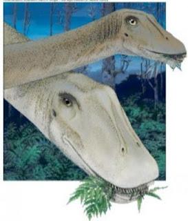 Ilustración de dos ejemplares de distinta edad de diplodocus carnegii- MARK A.KLINGLER / CARNEGIE MUSEUM OF NATURAL HISTORY