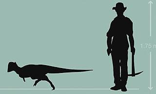 Descubren un dinosaurio con un bulto de hueso sólido en la cabeza. Foto: NICHOLAS LONGRICH