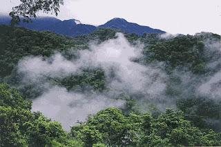 Bosque nuboso o Yungas- Parque Nacional Calilegua-Salta
