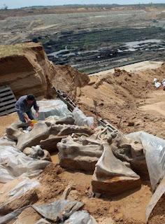 Excavación de un esqueleto completo de mamut meridional de hace un millón de años cerca de Kostolac (Serbia).- ALEKSANDAR STANKOVIC/AFP