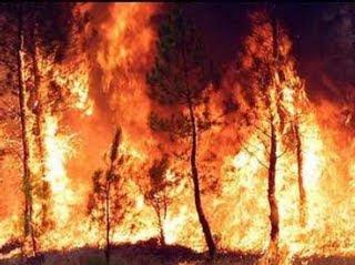 El futuro del paisaje mediterráneo tras los incendios forestales