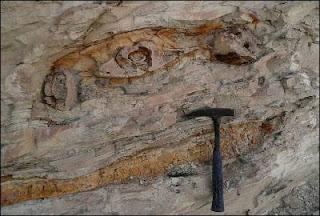 Restos fosilizados de una ballena, que además cobija restos de tiburones y pingüinos. EFE