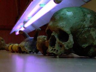 Los cráneos estudiados. SCIENCE