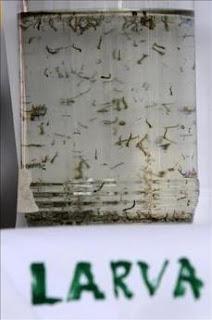 En alerta máxima el sistema epidemiológico dominicano por aumento del dengue. EFE