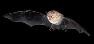 Perú alerta por un brote de rabia entre indígenas ocasionado por murciélagos
