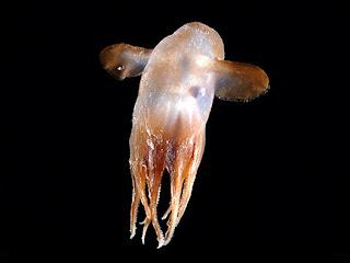 Especies secretas del mar, al descubierto. Medusa