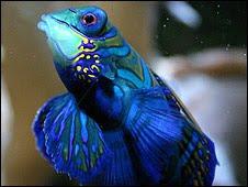El estudio se centró en algunas especies de peces que viven en las barreras de coral