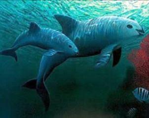 Vaquita marina podría extinguirse en dos años