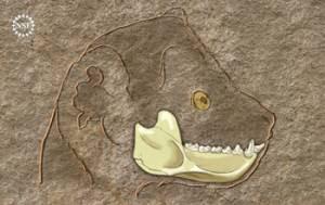 El Darwinus y el Afradapis no son del linaje del ser humano