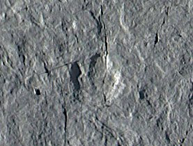 Sobre la pista de los primeros dinosaurios