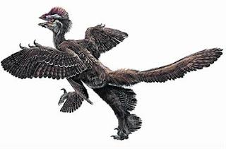 Anchiornis huxleyi, un eslabón entre dinosaurios y aves
