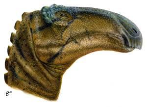 Jeyawati Rugoculus, Nueva Especie de Dinosaurio Herbívoro