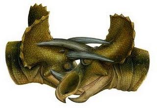 El triceratops nunca existió como especie separada