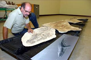 Un paleontólogo argentino aporta una nueva visión de los mosasaurios. epa