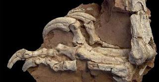 El dragón robusto, un primo del velociraptor, con doble garra en los pies