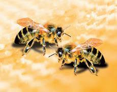 2 μελισσούλες