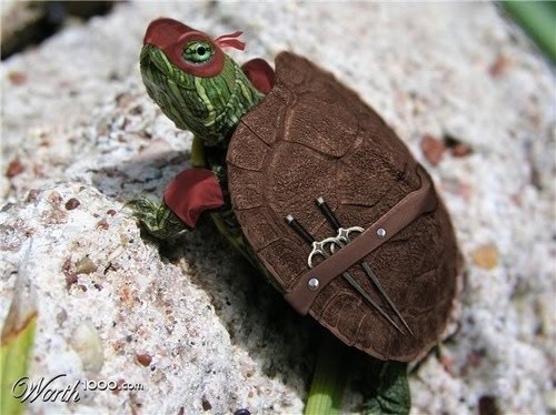Worlds cutest turtle