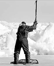 Matanza de focas en Canadá