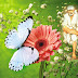 Sai Baba's Grace Is Always Felt - Sai Devotee Rajeev