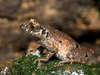湄公河六大新物種