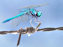 Nadie canta del rumor de la libélula