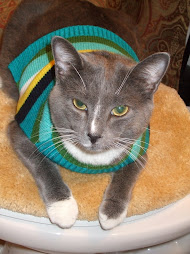 Jack in his Christmas sweater