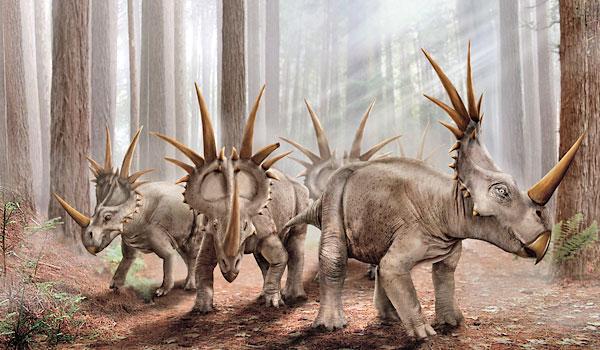 [Styracosaurus+(26).jpg]