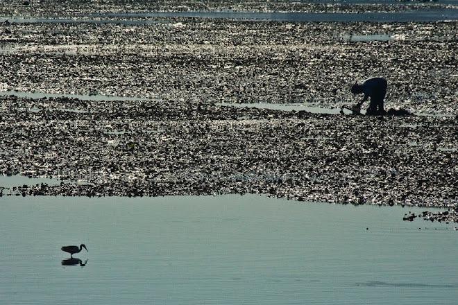 Duas espécies diferentes, o mesmo objectivo: comida - Baía do Seixal