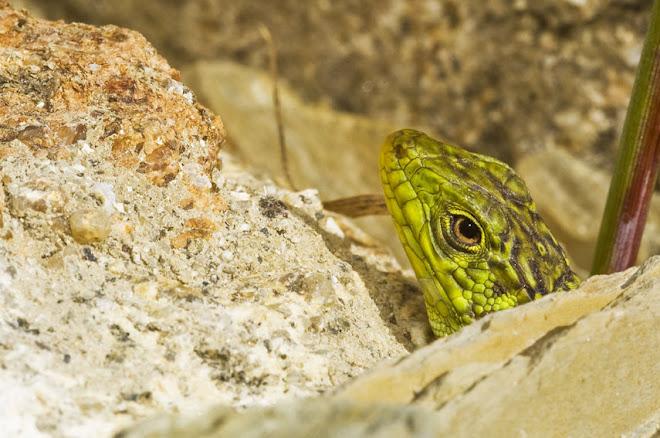 Habitantes do Parque da Paz 1, Almada - 2010, Ano Internacional da Biodiversidade
