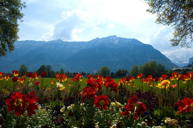 Um Jardim Florido - Interlaken, Suiça