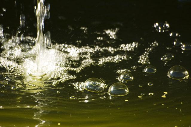 Fugazes bolhas na espuma dos dias - Parque da Paz, Almada