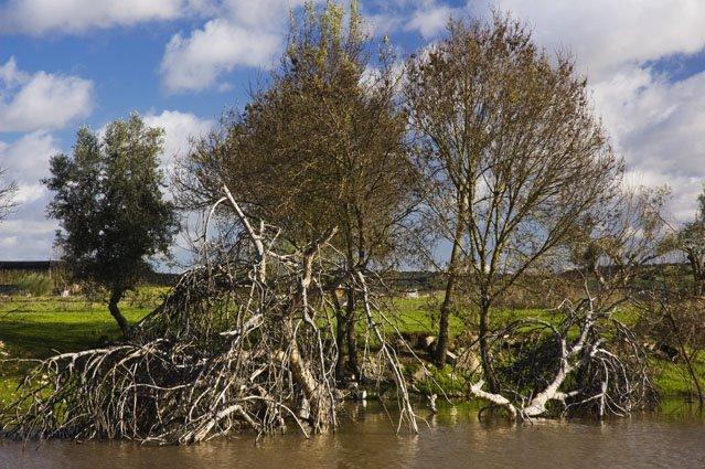 Árvores - Ribeira de Mures, Juromenha