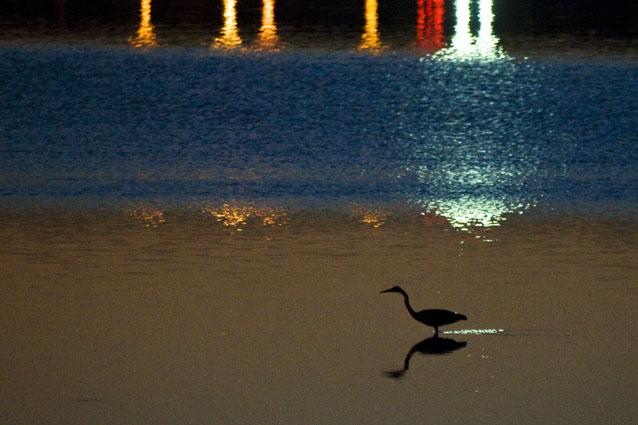 A garça e as luzes da cidade - Baía do Seixal