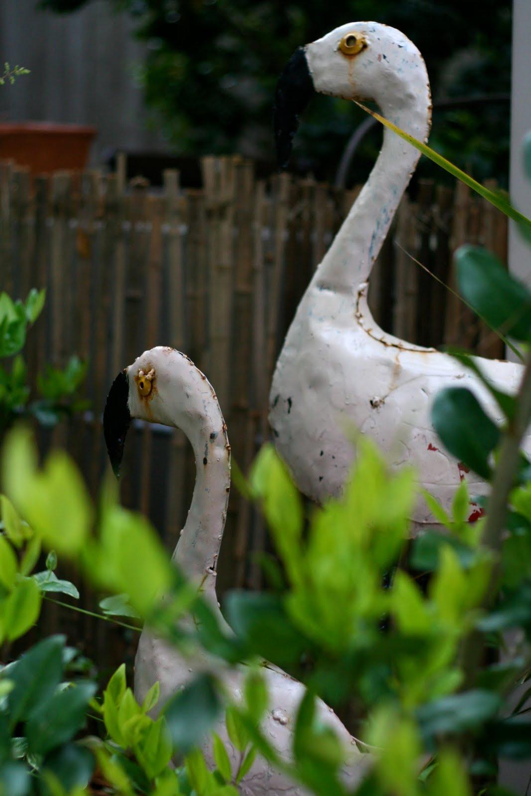 http://2.bp.blogspot.com/_DBLqeKbEEdM/S9TriOAvLkI/AAAAAAAAAdw/ee0mO5SGN0M/s1600/flamingos.jpg