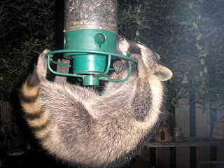 Raccoon Alert. This Is Completely Random, But I Thought It Was Funny. My  Mom Has A Window In Her Kitchen That Looks Out On The Backyard. A Few Years  Ago, ...