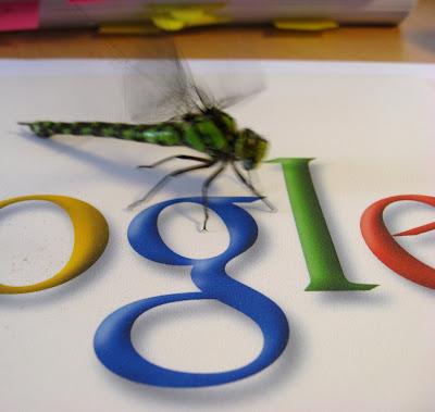 google, picasa, fault, bug, photo,  fotók,  fotó