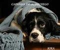 CAMPANHA DO ACONCHEGO:PARTICIPE!