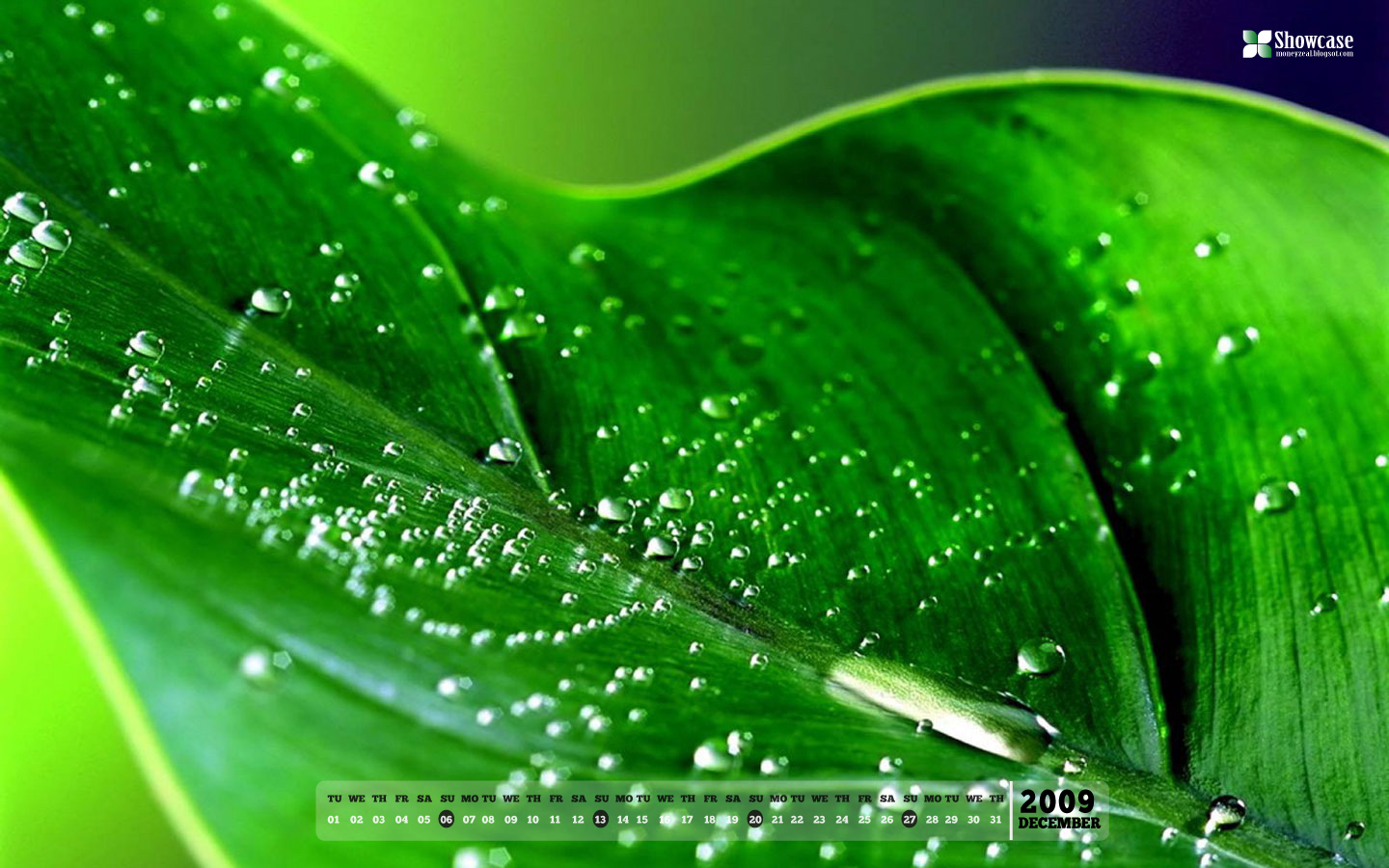 Desktop Free Green Wallpapers