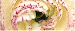 Saisonale Blumen