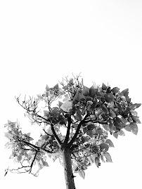 Când frunzele se veștejesc și acoperă rugul pământului e semn că apusul se închină nopții...