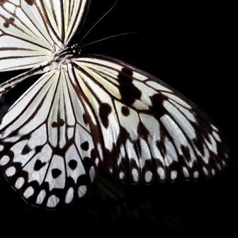 Din aripi de fluturi scurs-am lumina, să împietrească tăcerea într-o secundă de nezbor...